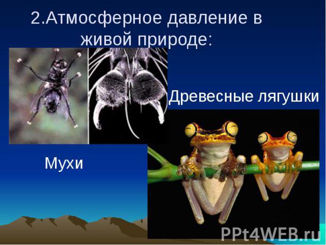 2.Атмосферное давление в живой природе: Древесные лягушки