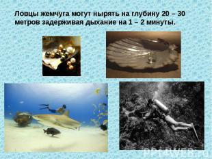 Ловцы жемчуга могут нырять на глубину 20 – 30 метров задерживая дыхание на 1 – 2