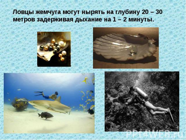 Ловцы жемчуга могут нырять на глубину 20 – 30 метров задерживая дыхание на 1 – 2 минуты.