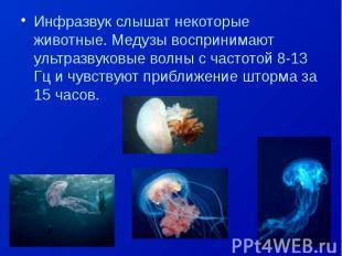 Инфразвук слышат некоторые животные. Медузы воспринимают ультразвуковые волны с
