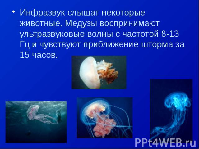 Инфразвук слышат некоторые животные. Медузы воспринимают ультразвуковые волны с частотой 8-13 Гц и чувствуют приближение шторма за 15 часов.Инфразвук слышат некоторые животные. Медузы воспринимают ультразвуковые волны с частотой 8-13 Гц и чувствуют …