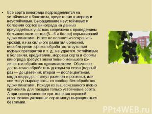 Все сорта винограда подразделяются на устойчивые к болезням, вредителям и морозу