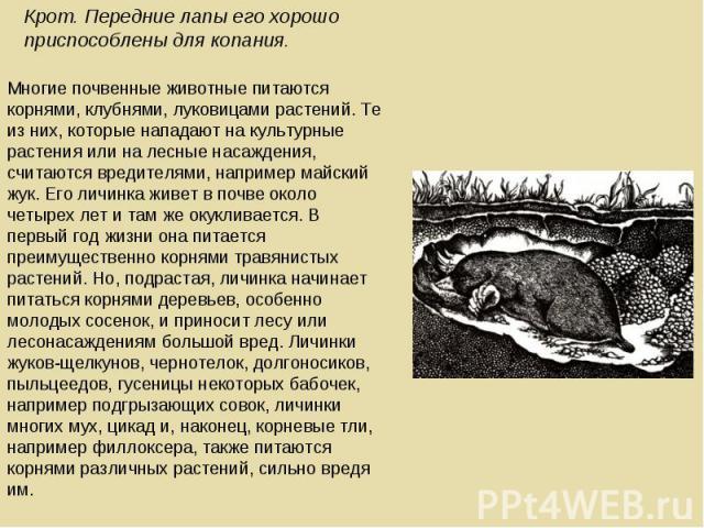 Крот. Передние лапы его хорошо приспособлены для копания. Многие почвенные животные питаются корнями, клубнями, луковицами растений. Те из них, которые нападают на культурные растения или на лесные насаждения, считаются вредителями, например майский…