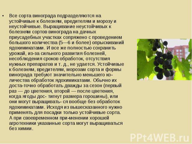 Все сорта винограда подразделяются на устойчивые к болезням, вредителям и морозу и неустойчивые. Выращивание неустойчивых к болезням сортов винограда на дачных приусадебных участках сопряжено с проведением большого количества (5—6 и более) опрыскива…