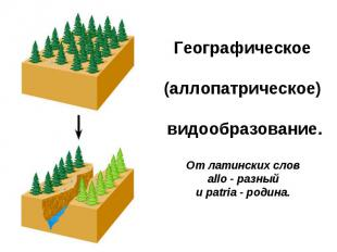 Географическое (аллопатрическое)видообразование. От латинских слов allo - разны