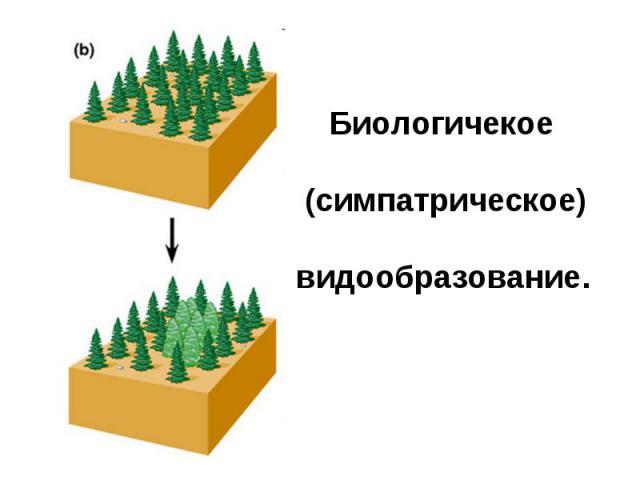 Биологичекое (симпатрическое)видообразование.