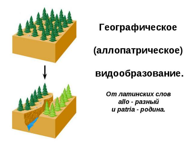 Географическое (аллопатрическое)видообразование. От латинских слов allo - разный и patria - родина.