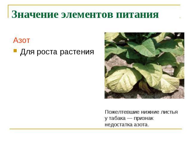 Значение элементов питания АзотДля роста растения Пожелтевшие нижние листьяу табака— признакнедостатка азота.
