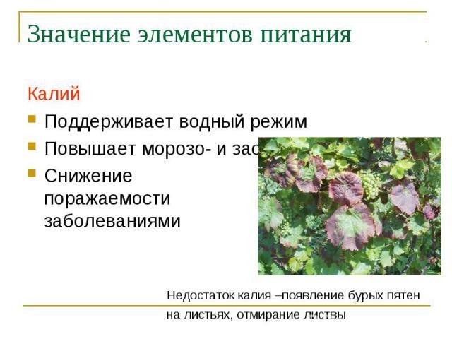 Значение элементов питания КалийПоддерживает водный режимПовышает морозо- и засухоустойчивостьСнижениепоражаемостизаболеваниями Недостаток калия –появление бурых пятенна листьях, отмирание листвы