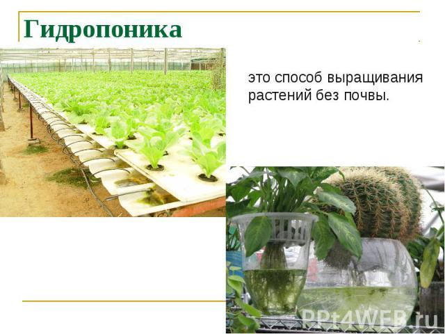 Гидропоника это способ выращиваниярастений без почвы.