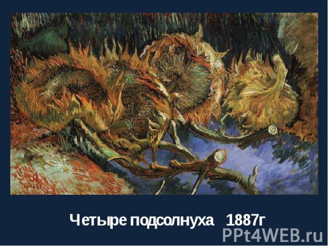 Четыре подсолнуха 1887г