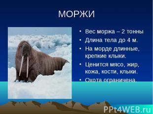 МОРЖИВес моржа – 2 тонныДлина тела до 4 м.На морде длинные, крепкие клыки.Ценитс