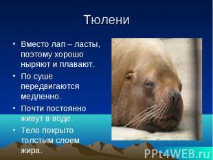 ТюлениВместо лап – ласты, поэтому хорошо ныряют и плавают.По суше передвигаются