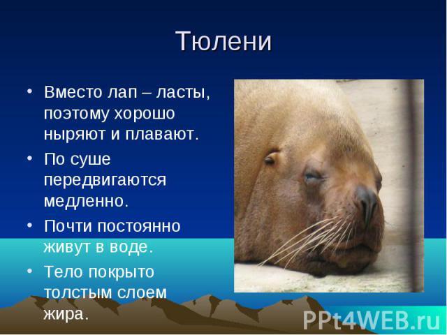 ТюлениВместо лап – ласты, поэтому хорошо ныряют и плавают.По суше передвигаются медленно.Почти постоянно живут в воде.Тело покрыто толстым слоем жира.