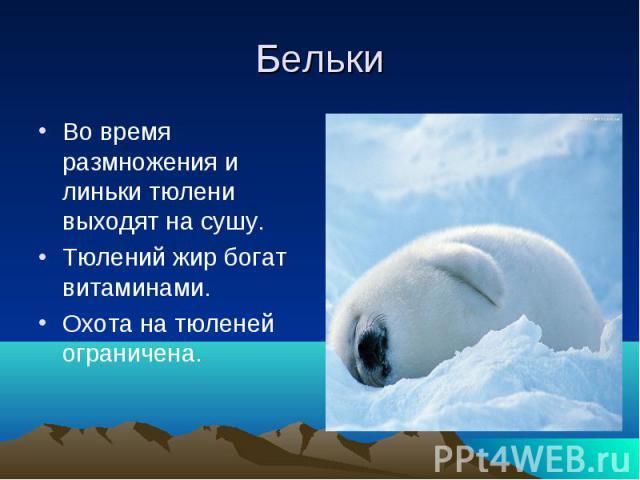 БелькиВо время размножения и линьки тюлени выходят на сушу.Тюлений жир богат витаминами.Охота на тюленей ограничена.