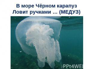 В море Чёрном карапузЛовит ручками … (МЕДУЗ)