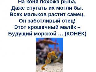 На коня похожа рыба, Даже спутать их могли бы. Всех мальков растит самец, Он заб