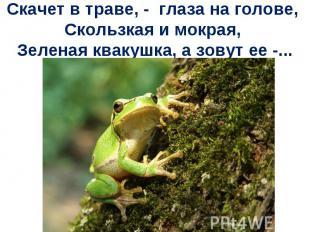 Скачет в траве, - глаза на голове, Скользкая и мокрая, Зеленая квакушка, а зовут
