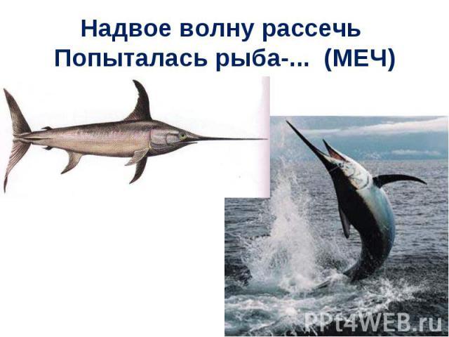Надвое волну рассечь Попыталась рыба-... (МЕЧ)
