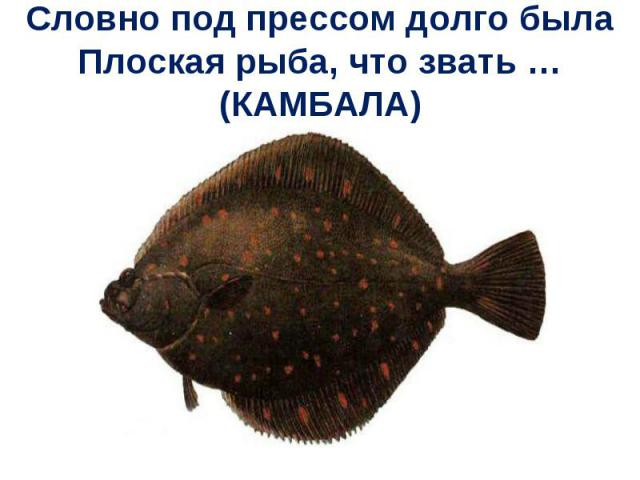 Словно под прессом долго былаПлоская рыба, что звать … (КАМБАЛА)