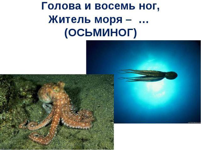 Голова и восемь ног,Житель моря – … (ОСЬМИНОГ)