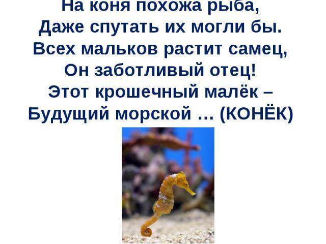 На коня похожа рыба, Даже спутать их могли бы. Всех мальков растит самец, Он заботливый отец! Этот крошечный малёк – Будущий морской … (КОНЁК)