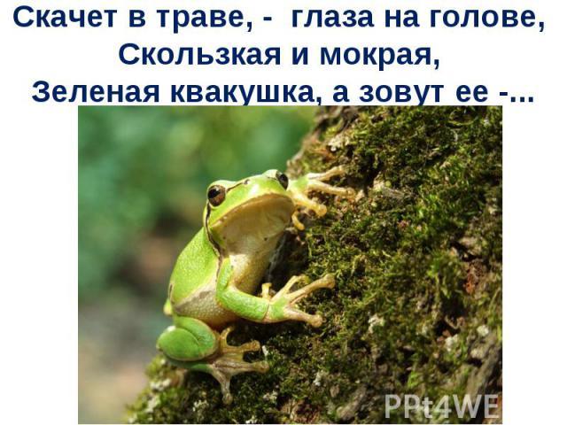 Скачет в траве, - глаза на голове, Скользкая и мокрая, Зеленая квакушка, а зовут ее -...
