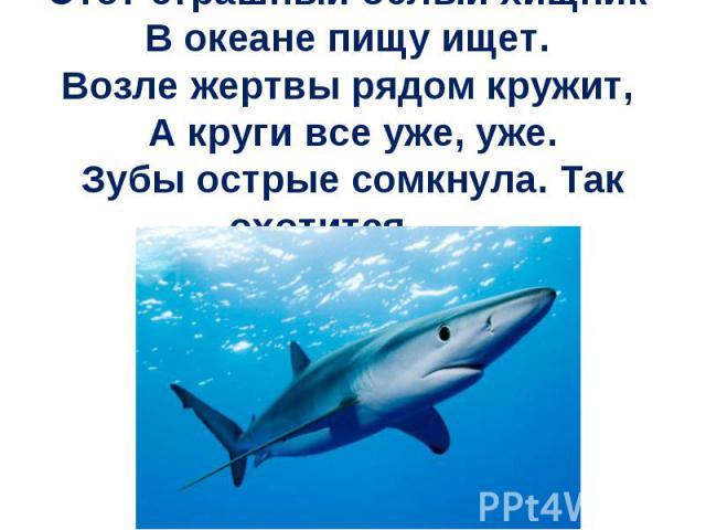 Этот страшный белый хищник В океане пищу ищет. Возле жертвы рядом кружит, А круги все уже, уже.Зубы острые сомкнула. Так охотится …