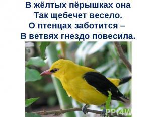 В жёлтых пёрышках онаТак щебечет весело.О птенцах заботится – В ветвях гнездо по