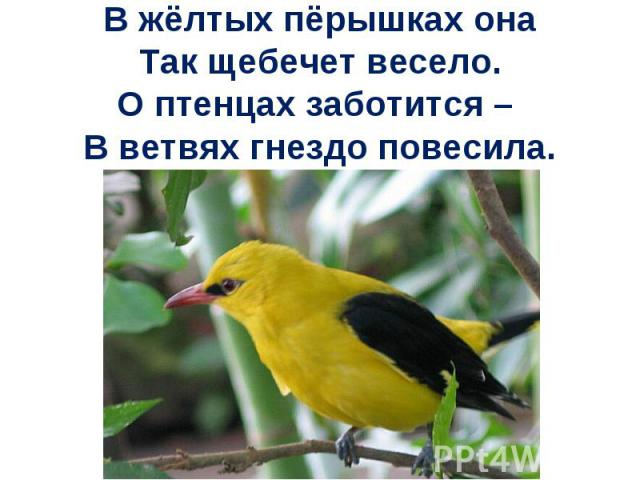 В жёлтых пёрышках онаТак щебечет весело.О птенцах заботится – В ветвях гнездо повесила.