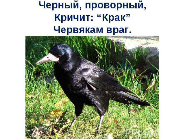 """Черный, проворный,Кричит: """"Крак""""Червякам враг."""