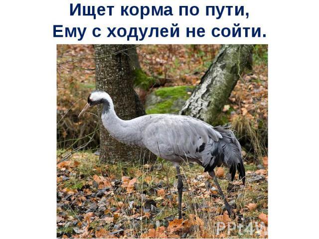 Ищет корма по пути,Ему с ходулей не сойти.