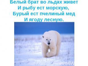Белый брат во льдах живетИ рыбу ест морскую, Бурый ест пчелиный медИ ягоду лесну