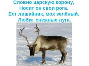 Словно царскую корону, Носит он свои рога. Ест лишайник, мох зелёный. Любит снеж