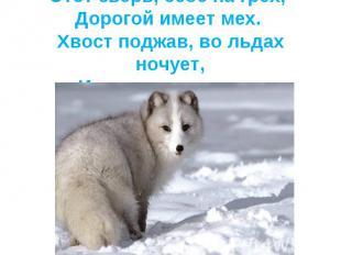 Этот зверь, себе на грех, Дорогой имеет мех. Хвост поджав, во льдах ночует,И по