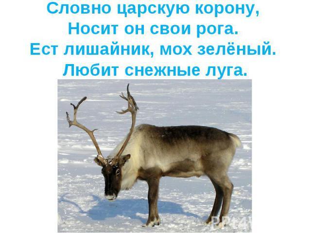 Словно царскую корону, Носит он свои рога. Ест лишайник, мох зелёный. Любит снежные луга.