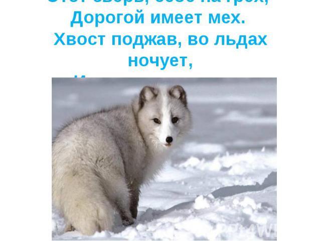 Этот зверь, себе на грех, Дорогой имеет мех. Хвост поджав, во льдах ночует,И по северу кочует.