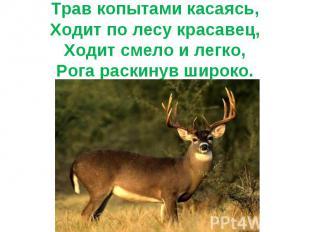 Трав копытами касаясь,Ходит по лесу красавец,Ходит смело и легко,Рога раскинув ш