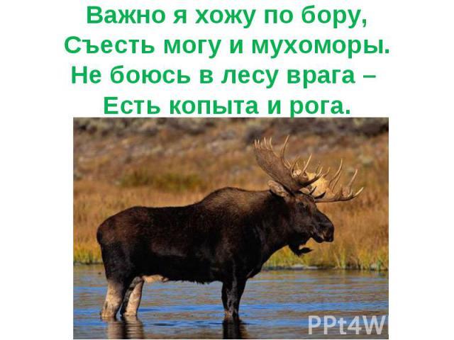 Важно я хожу по бору,Съесть могу и мухоморы.Не боюсь в лесу врага – Есть копыта и рога.