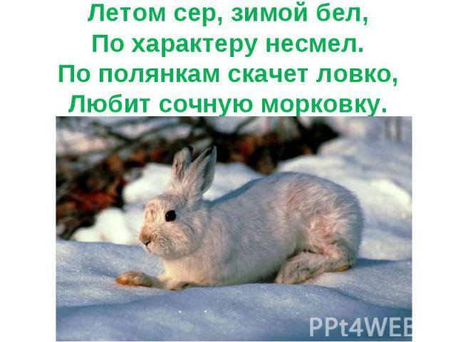 Летом сер, зимой бел,По характеру несмел.По полянкам скачет ловко,Любит сочную морковку.