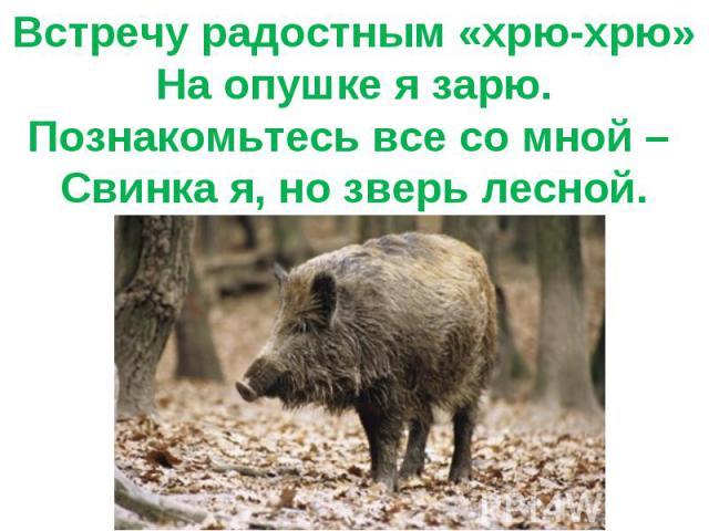 Встречу радостным «хрю-хрю»На опушке я зарю.Познакомьтесь все со мной – Свинка я, но зверь лесной.