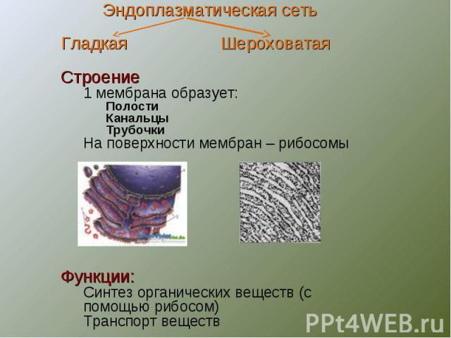 Эндоплазматическая сетьГладкая ШероховатаяСтроение1 мембрана образует:ПолостиКанальцыТрубочкиНа поверхности мембран – рибосомыФункции:Синтез органических веществ (с помощью рибосом)Транспорт веществ