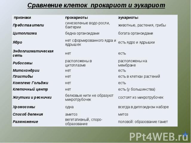 Сравнение клеток прокариот и эукариот