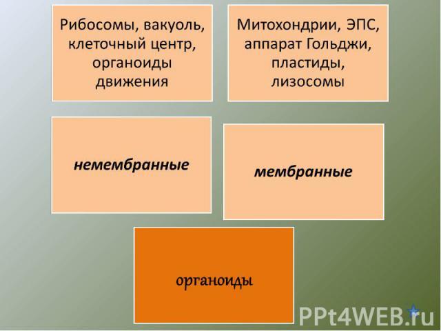 Рибосомы, вакуоль, клеточный центр, органоиды движенияМитохондрии, ЭПС, аппарат Гольджи, пластиды, лизосомы немембранныемембранныеорганоиды