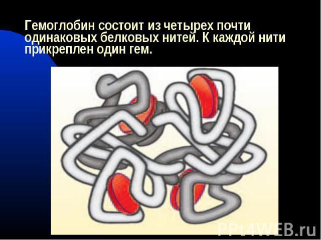 Гемоглобин состоит из четырех почти одинаковых белковых нитей. К каждой нити прикреплен один гем.