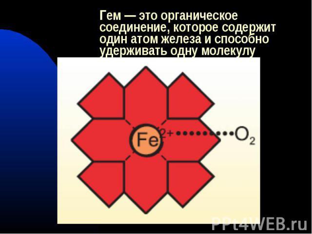 Гем — это органическое соединение, которое содержит один атом железа и способно удерживать одну молекулу кислорода.