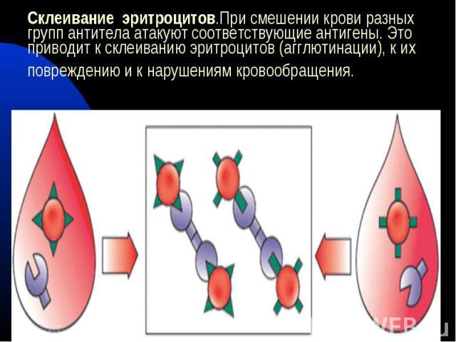 Склеивание эритроцитов.При смешении крови разных групп антитела атакуют соответствующие антигены. Это приводит к склеиванию эритроцитов (агглютинации), к их повреждению и к нарушениям кровообращения.