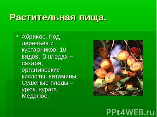 Абрикос. Род деревьев и кустарников. 10 видов. В плодах –сахара, органические ки