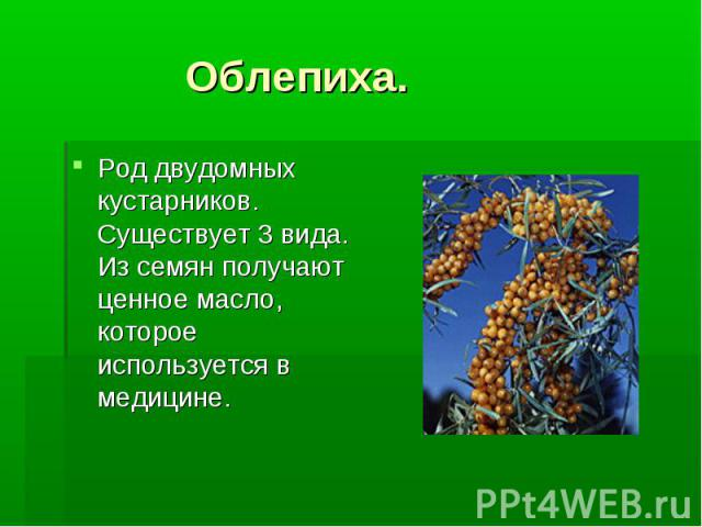 Род двудомных кустарников. Существует 3 вида. Из семян получают ценное масло, которое используется в медицине.