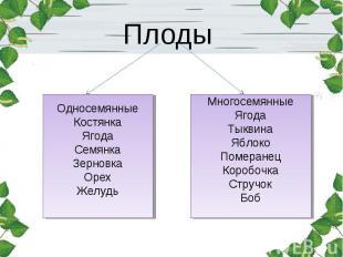 Плоды ОдносемянныеКостянкаЯгодаСемянкаЗерновкаОрехЖелудь МногосемянныеЯгодаТыкви